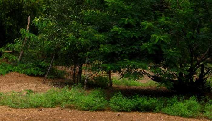 অজানা জন্তুর দেখা পেয়ে ভয়ে সিঁটিয়ে বীরভূমের পলসিটা গ্রাম