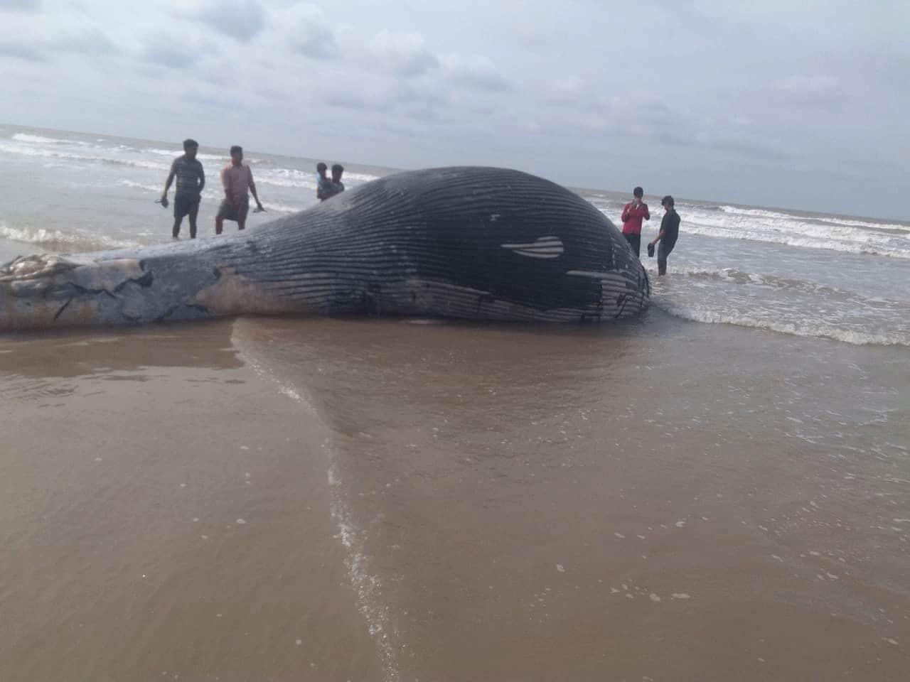 Whale in Mandarmani
