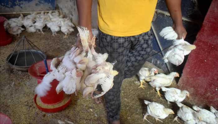 নয়া আতঙ্ক! ভারতে Bird Flu-তে আক্রান্ত হয়ে মৃত্যু ১২ বছরের কিশোরের