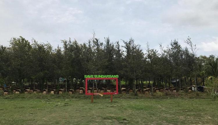 Natural Mangrove Honey, Sundarban