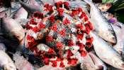 করোনা সংক্রমণের ভয়াবহতা থেকে সুরক্ষা দিতে পারে ইলিশের তেল! গবেষণায় মিলল প্রমাণ
