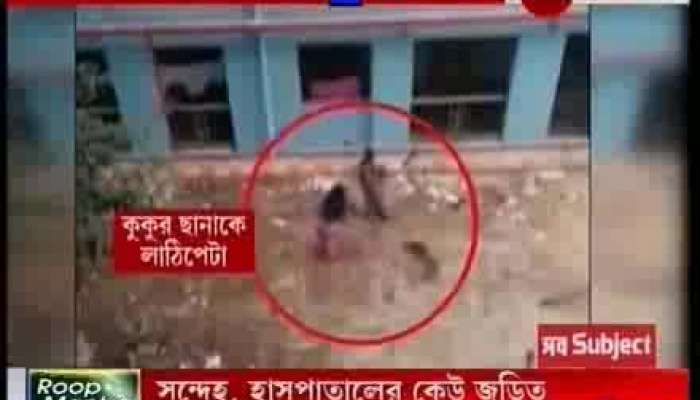 Puppies beaten to death in NRS Hospital