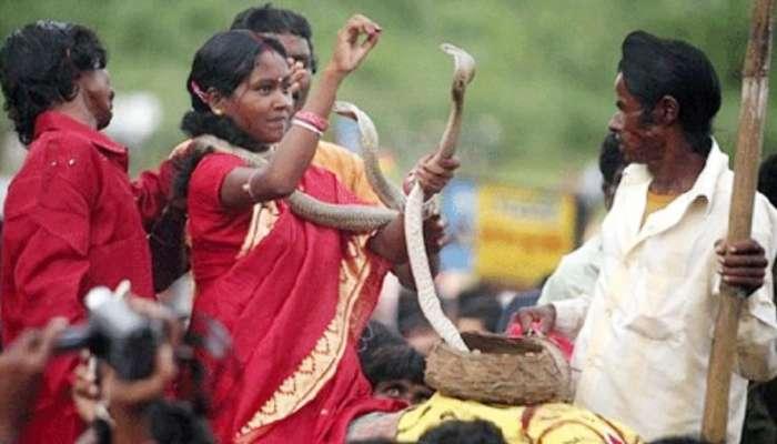 রয়েছে নিষেধাজ্ঞা, তবুও প্রথা মেনে বিষধর সাপ নিয়ে খেলা চলছে 'ঝাপান' উৎসবে