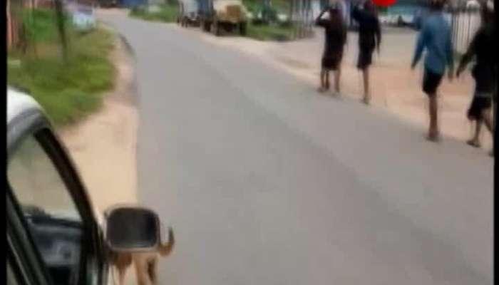 Dog follows for 480 kilometer on the way to Shabarimala