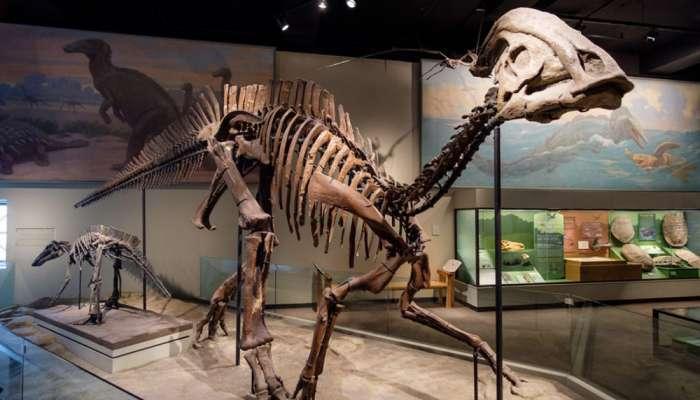 সাড়ে ৭ কোটি বছর আগেও শরীরে বাসা বেঁধেছিল ক্যান্সার! প্রমাণ মিলল ডাইনোসরের হাড়ে