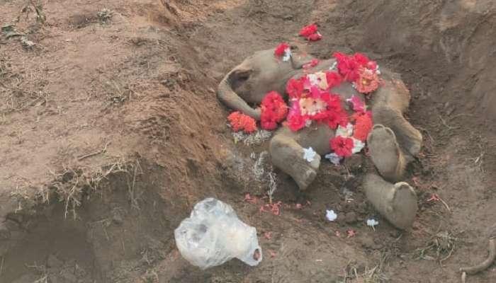 মর্মান্তিক! ডুয়ার্সের চা বাগানে হস্তি শাবকের মৃত্যু, নালায় মিলল দেহ