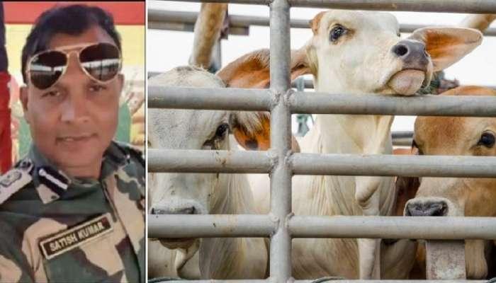 Cow Smuggling : শর্তসাপেক্ষে জামিন মঞ্জুর ধৃত BSF কম্যান্ড্যান্ট সতীশ কুমারের