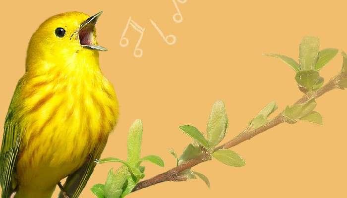 Duetting Songbirds:তোমার সুর আমার সুর সৃষ্টি করে ঐক্য সুর