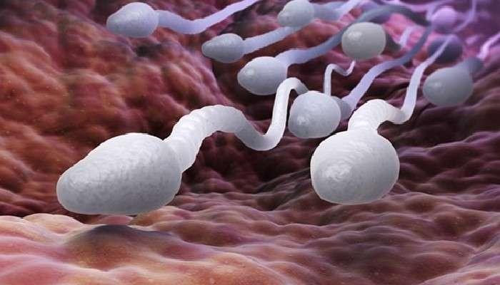 Alternative Contraceptives: অ্যান্টি-স্পার্ম অ্যান্টিবডি খুলে দিতে চলেছে গর্ভনিরোধের নতুন রাস্তা