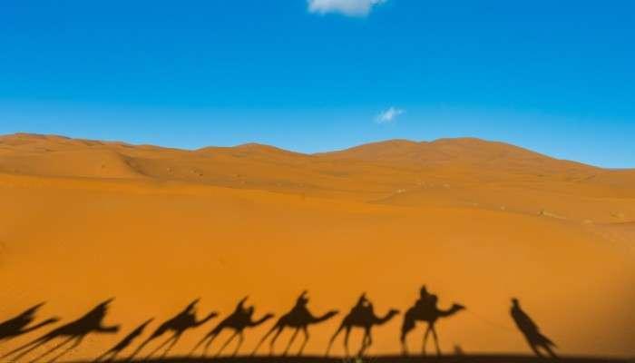 Camel Sculptures: সৌদির পাথুরে উটের বয়স ৮ হাজার বছর!