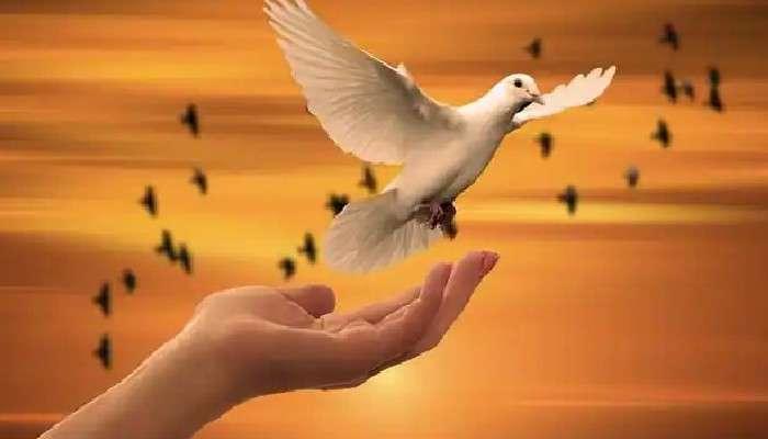 International Day Of Peace 2021: শান্তির খোঁজে ব্যাকুল বিশ্ব