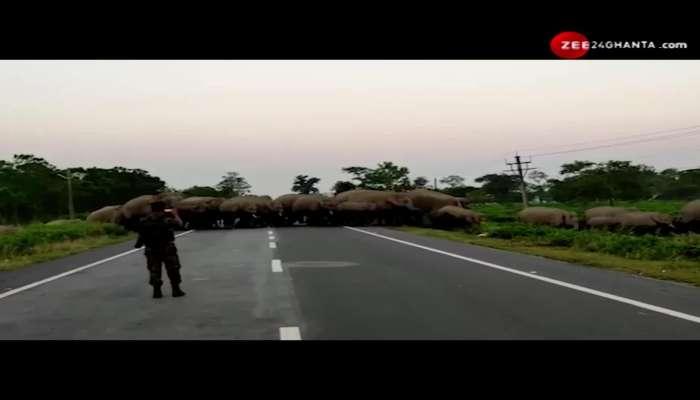 Elephants in Asian Highway crosses roads through Elephant Corridor