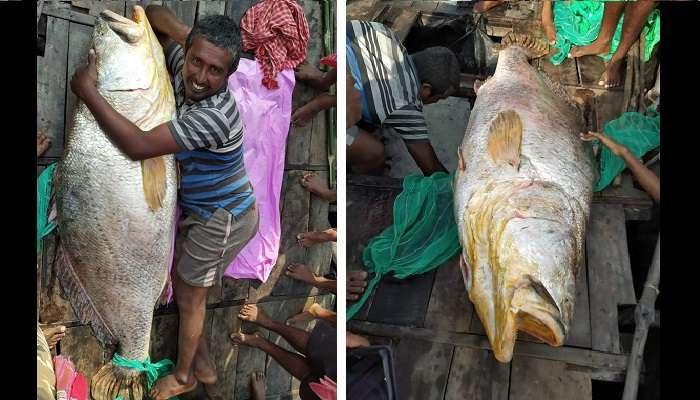 Giant Fish : সুন্দরবনের নদীতে ধরা পড়ল ৩৭ লাখি 'দৈত্যাকৃতি' মাছ